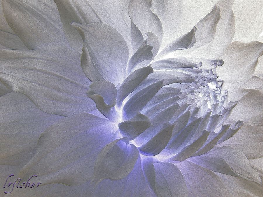 White Dahlia Inner Beauty WM