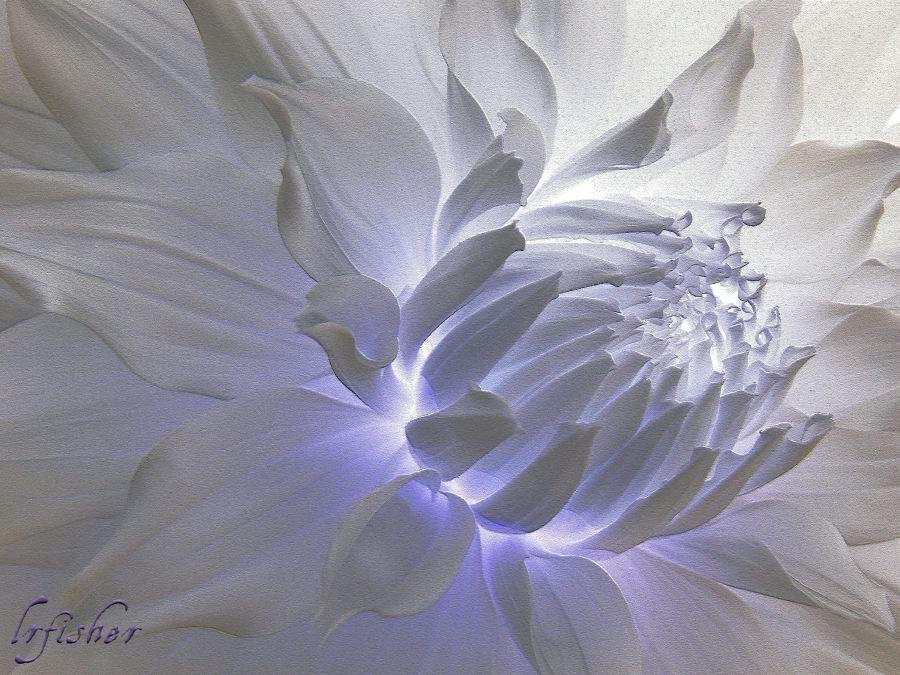 White Dahlia Inner Beauty WM