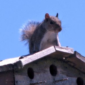 Squirrel WM
