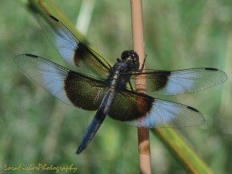 Dragonfly 15 WM