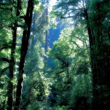 Forest Light MED blu
