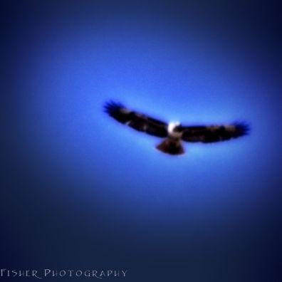 eagle-vignette-wm