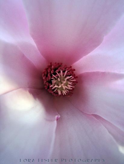 Magnolia 9345 WM