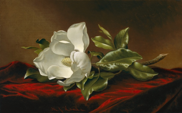 Martin Johnson Heade Magnolia